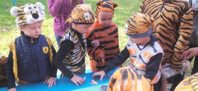 Тигрята-дошколята